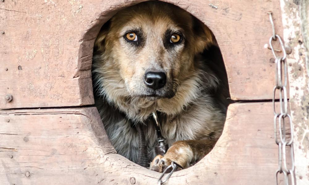 cane-catena